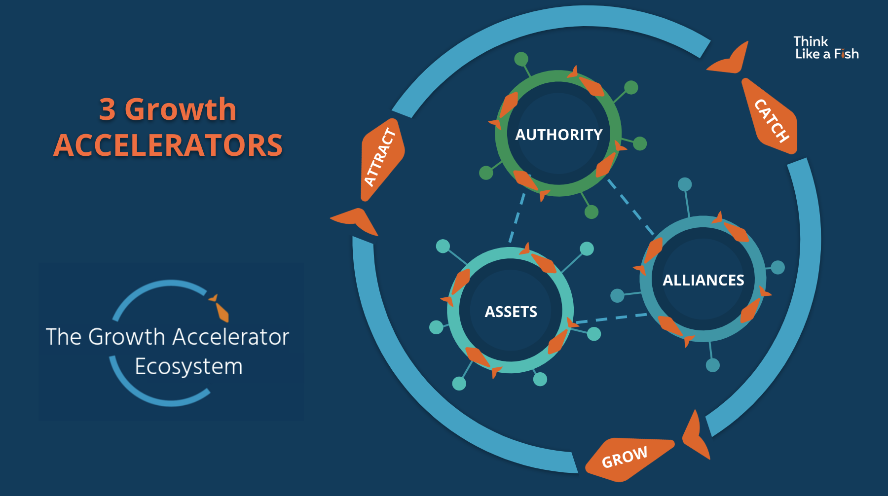 The Growth Accelerator Ecosystem